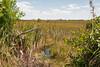 Sum (465) - 2015-04-01b Route Sancti Spiritus naar Valedero (131) - Reservaat Cienaga de Zapata (moeras)