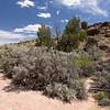 Habitat of Artemisia