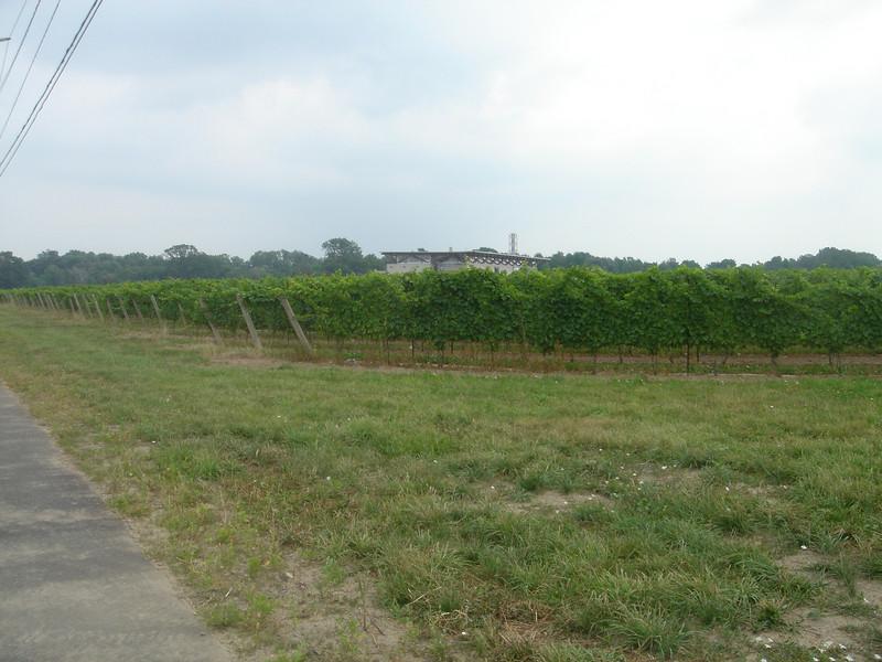 Veel wijnboeren in deze streek