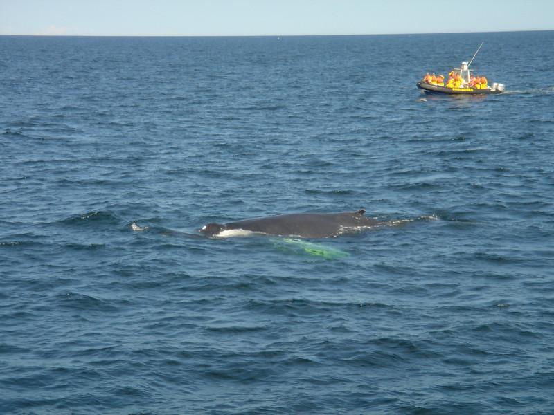 Een walvis!
