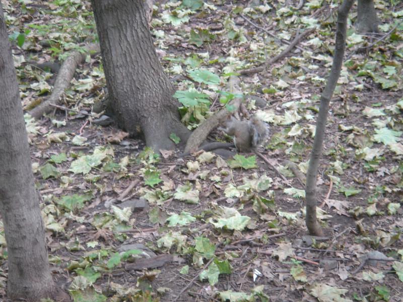 Veel eekhoorns gezien