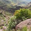 Op Gran Canaria de bergen in