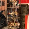 Levende kippen te koop