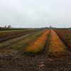 Herfst op de grens van Belgie/Nederland