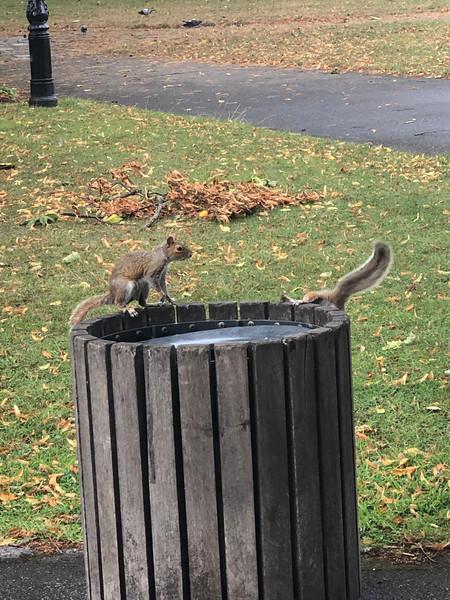 Eekhoorns in Southampton