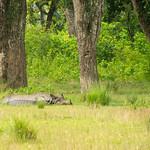 De eerste wilde neushoorn die we zagen