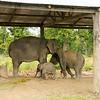Moeder en twee kinderen