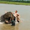 Zwemmen met een olifant