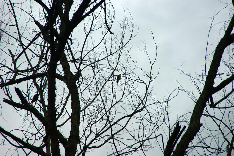 Echt iets voor ons: 's ochtends vroeg vogeltjes kijken