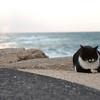 Kat aan zee?