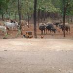 Wilde beesten in het park