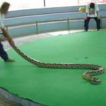 Tussenstop: slangenhouderij