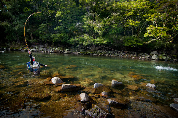Anglers strikes a trout on the Mohaka Stream, New Zealand