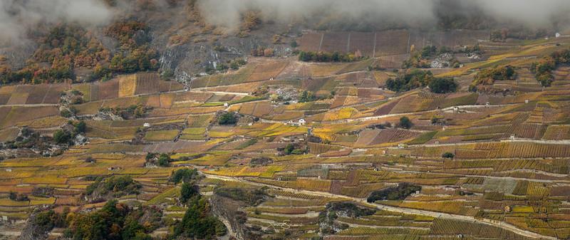 Vetroz Vineyards