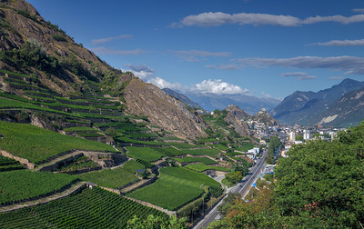 Vineyards of Sion
