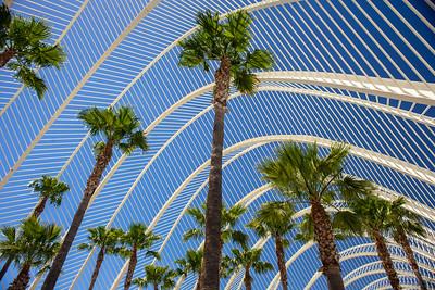 Palm Arch