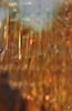 Golden orange Chandelier-Broussard, 24x44