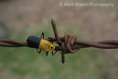 Biracial bug