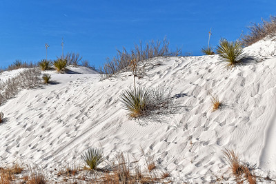 White Sands, NM-006-2021