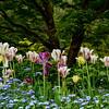 Last Tulips