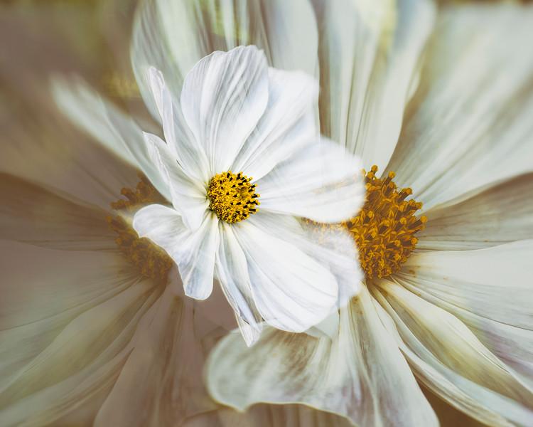 Van Dusen - Aug 19 2019 - White Flower Multi