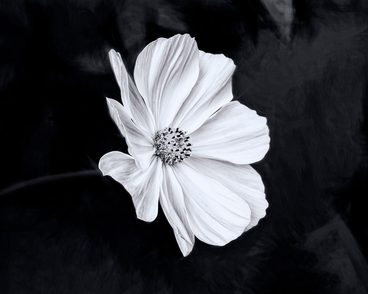 Van Dusen - Aug 19 2019 - White Flower Multi