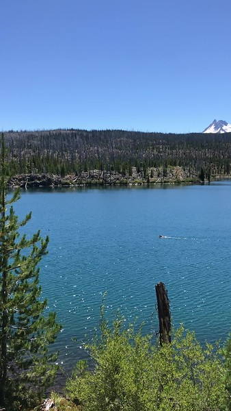 Olallie Lake - Timber chasing a duck