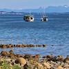 Oyster Farm Boats in Union Bay