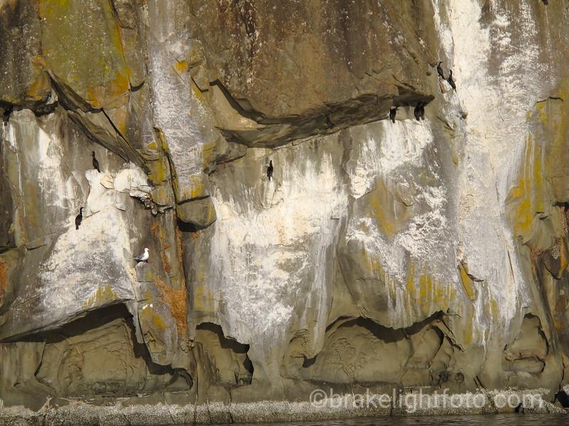 Cormorants on Elliot Bluff