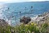 Strait of Juan de Fuca, Saxe Point Park