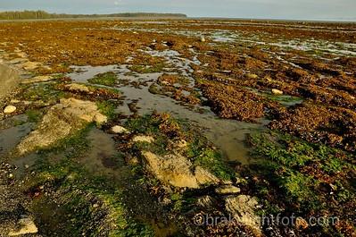 Rocky Tidal Flats
