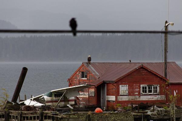 Bird On A Wire - Alert Bay - Cormorant Island, British Columbia, Canada