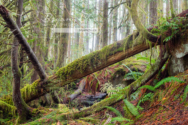 Vancouver Island Forests & Streams