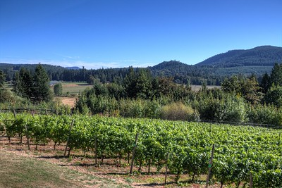"""Blue Grouse Estate Winery - Cowichan Valley, BC, Canada Visit our blog """"Blue Grouse Estate Winery"""" for the story behind the photo."""