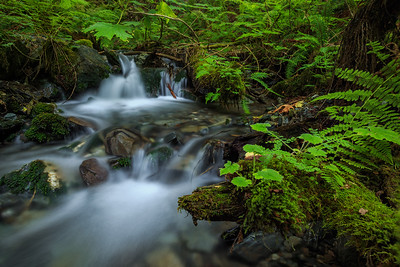 Bridal Creek Offshoot