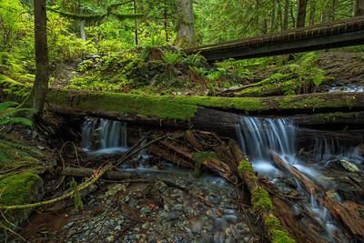 Bridal Creek Lower Cascades