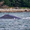 Juneau, Whale Watch 3