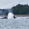Juneau, Whale Watch 15