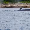 Juneau, Whale Watch 12