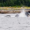Juneau, Whale Watch 5