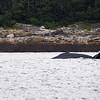 Juneau, Whale Watch 4