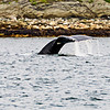 Juneau, Whale Watch 14