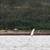 Juneau, Whale Watch 8