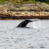 Juneau, Whale Watch 13