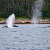 Juneau, Whale Watch 10