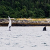 Juneau, Whale Watch 7