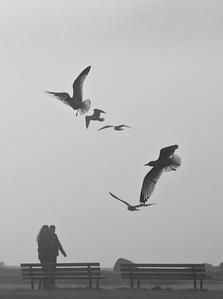 FogInVancouver_10_Flickr