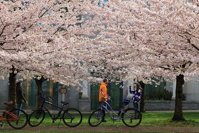 Blossoms and  Bikes