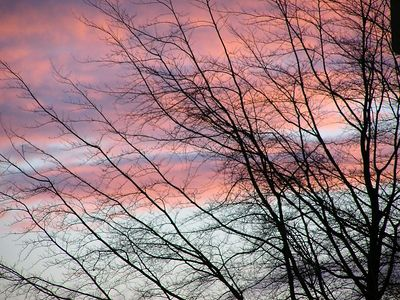 Sky_Trees