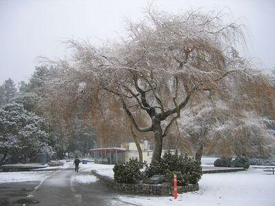 brown_tree
